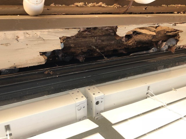 Picture of rotted window header.